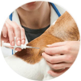 microchipping at Jollyes community pet clinic