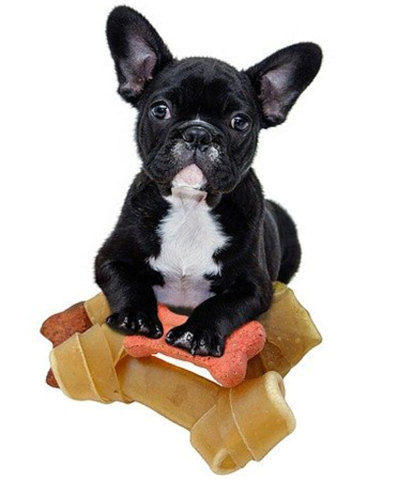 What to feed your Dog or Puppy