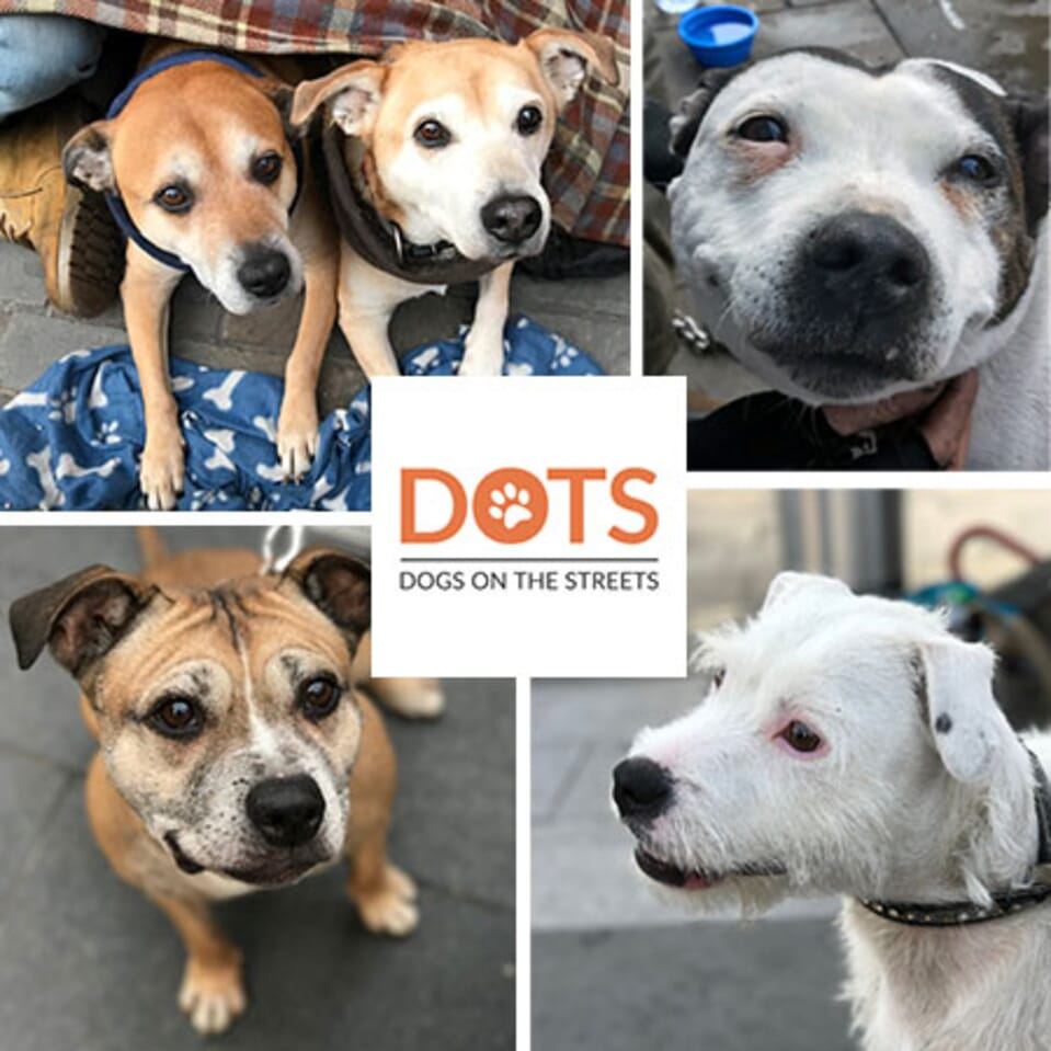 Dogs on the Streets Charity